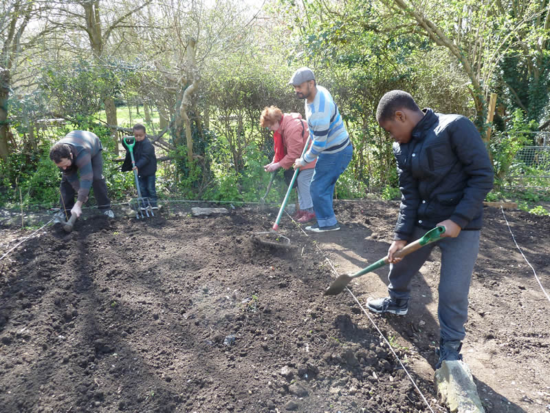 Learner beds - Glazebrook Growers at Streatham