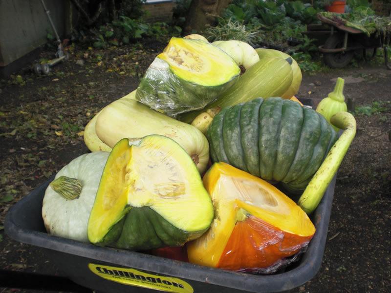 Pumpkins for sale, Sept 2013