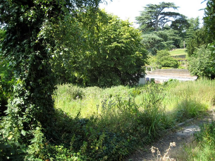 The garden in 2011 before we started work