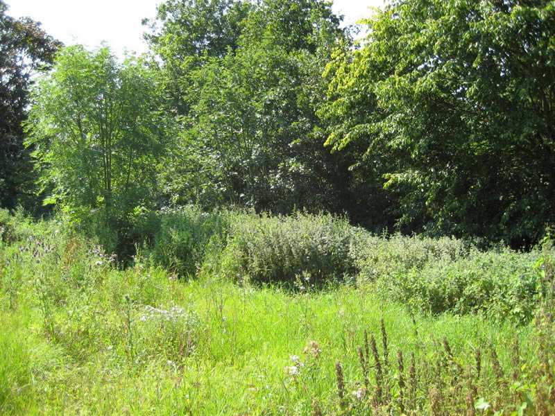 An overgrown wilderness, Summer 2011