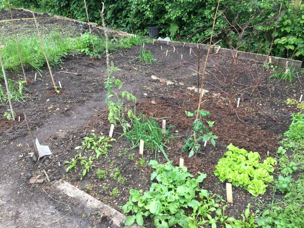 Learner Plot - Square Foot Gardening