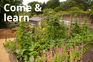 Streatham Common Community Garden community resource for
